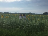 We pulled over for a great sunflower field