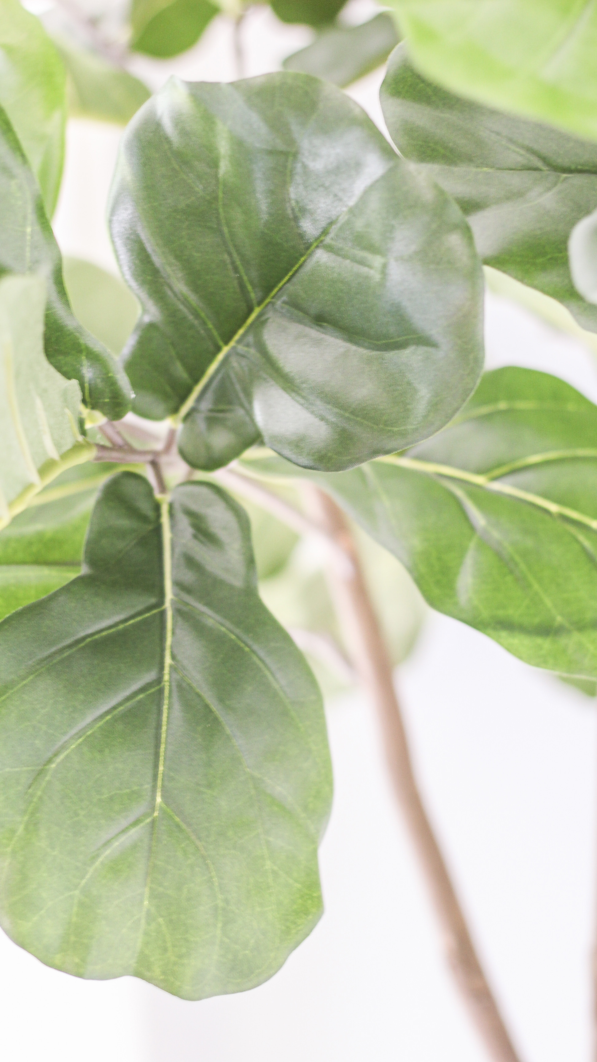 the best fake fiddle leaf fig