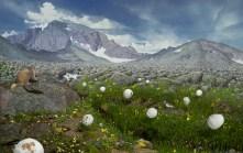 Jason DeMarte // Nature Preserve - Hydroginated Bounty