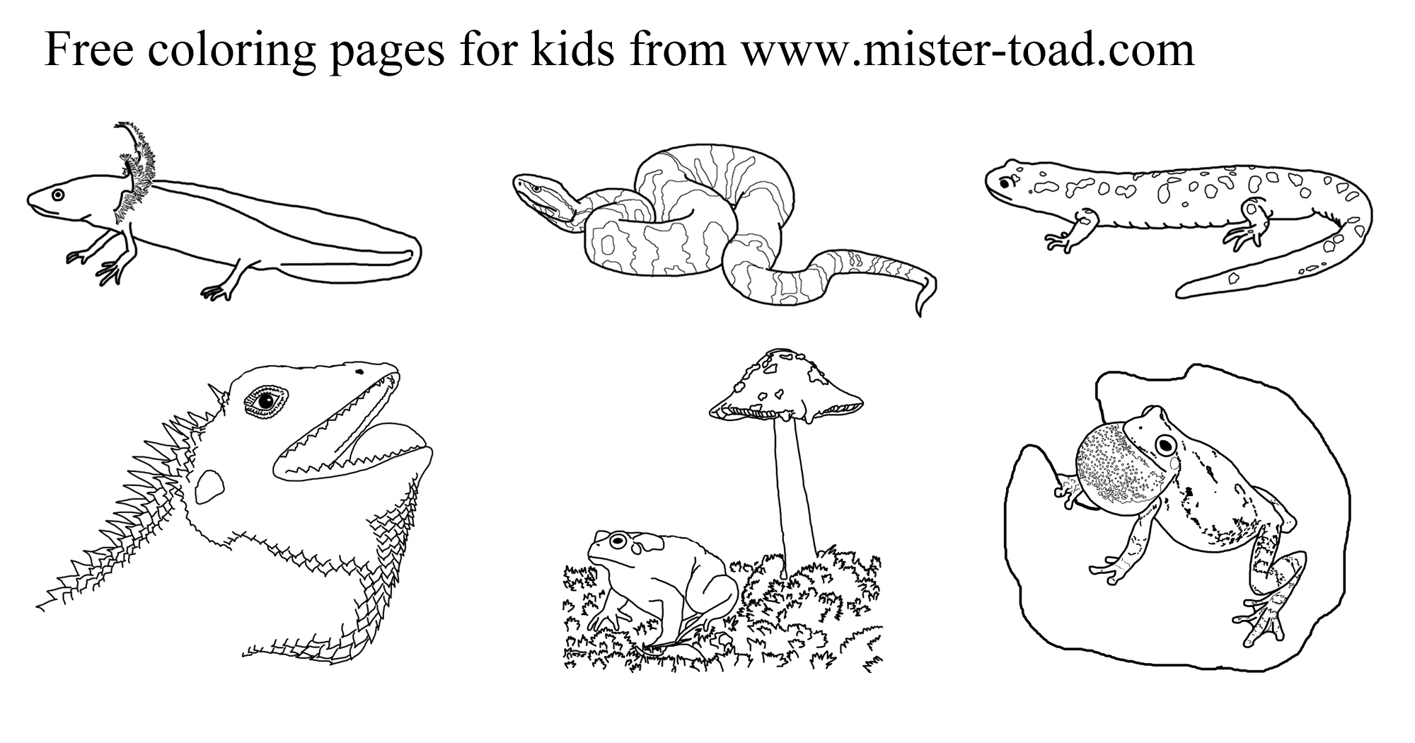 Amphibian Coloring Download Amphibian Coloring For Free