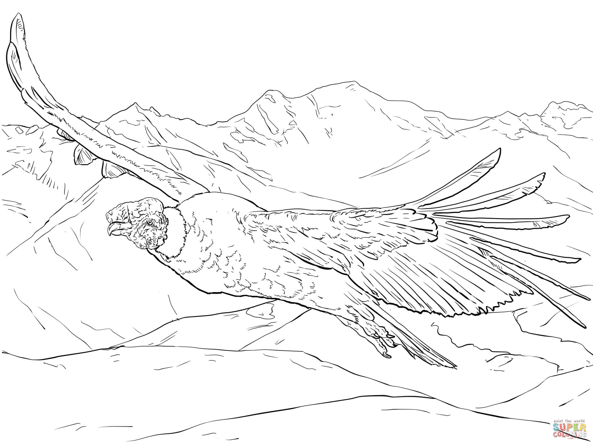 Download Andean Condor Coloring For Free