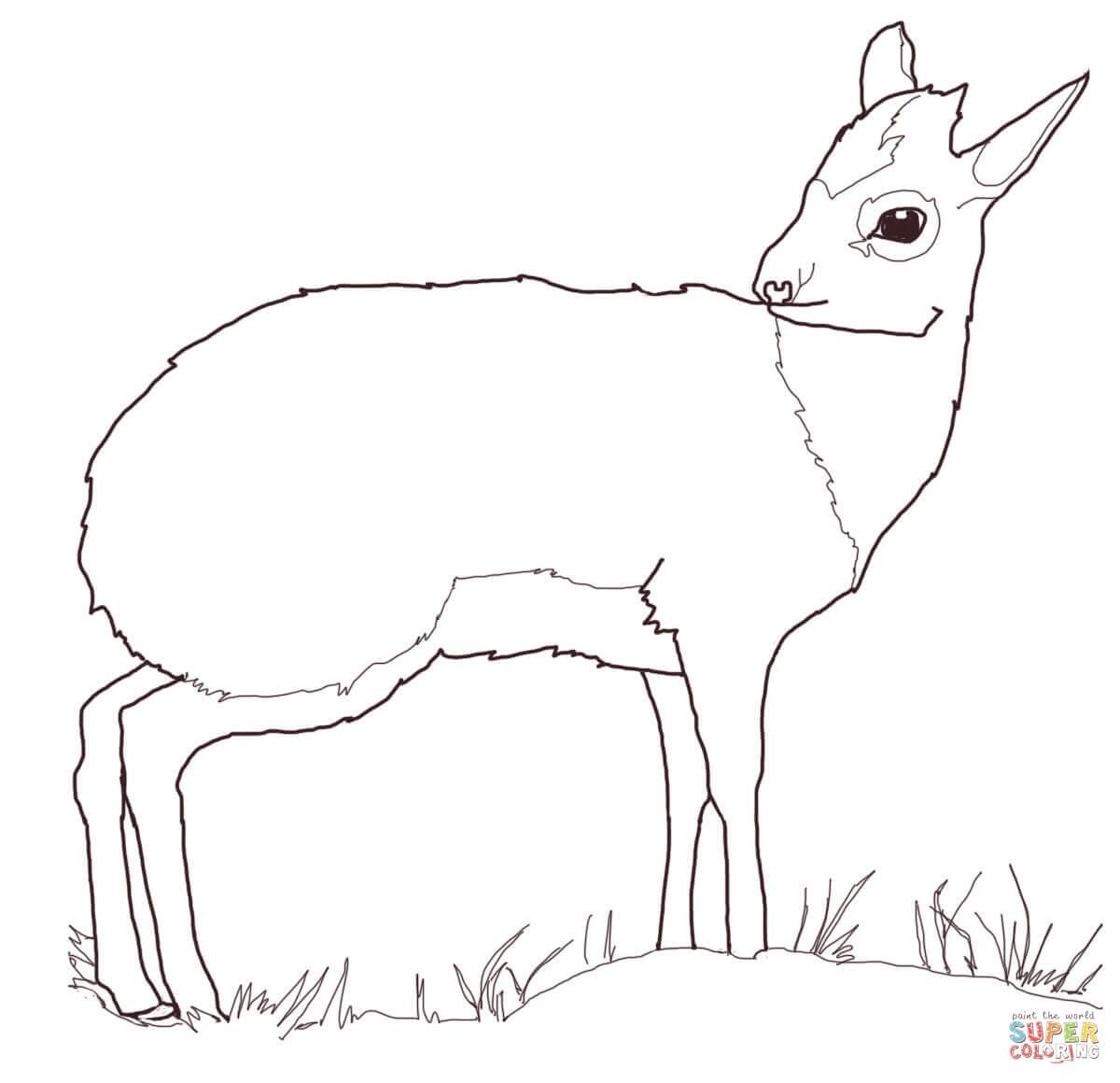 Antelope Coloring Download Antelope Coloring