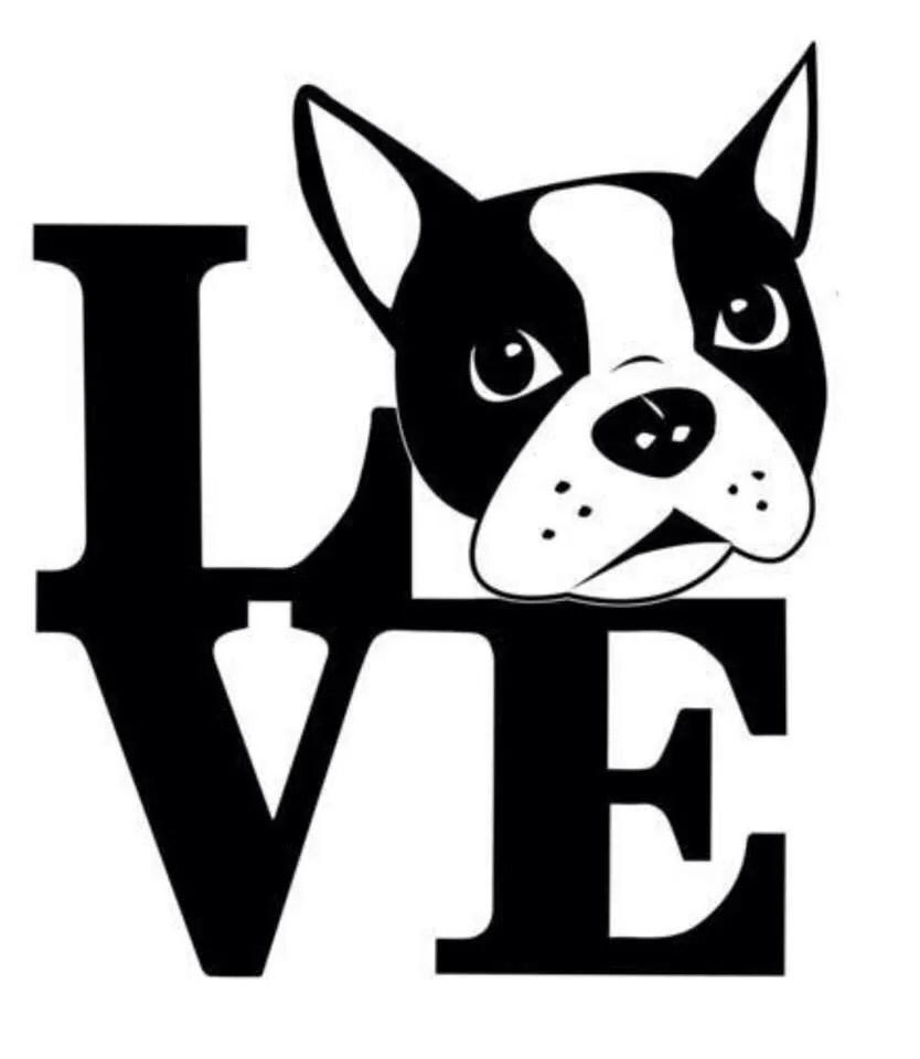 Download Boston Terrier svg, Download Boston Terrier svg for free 2019