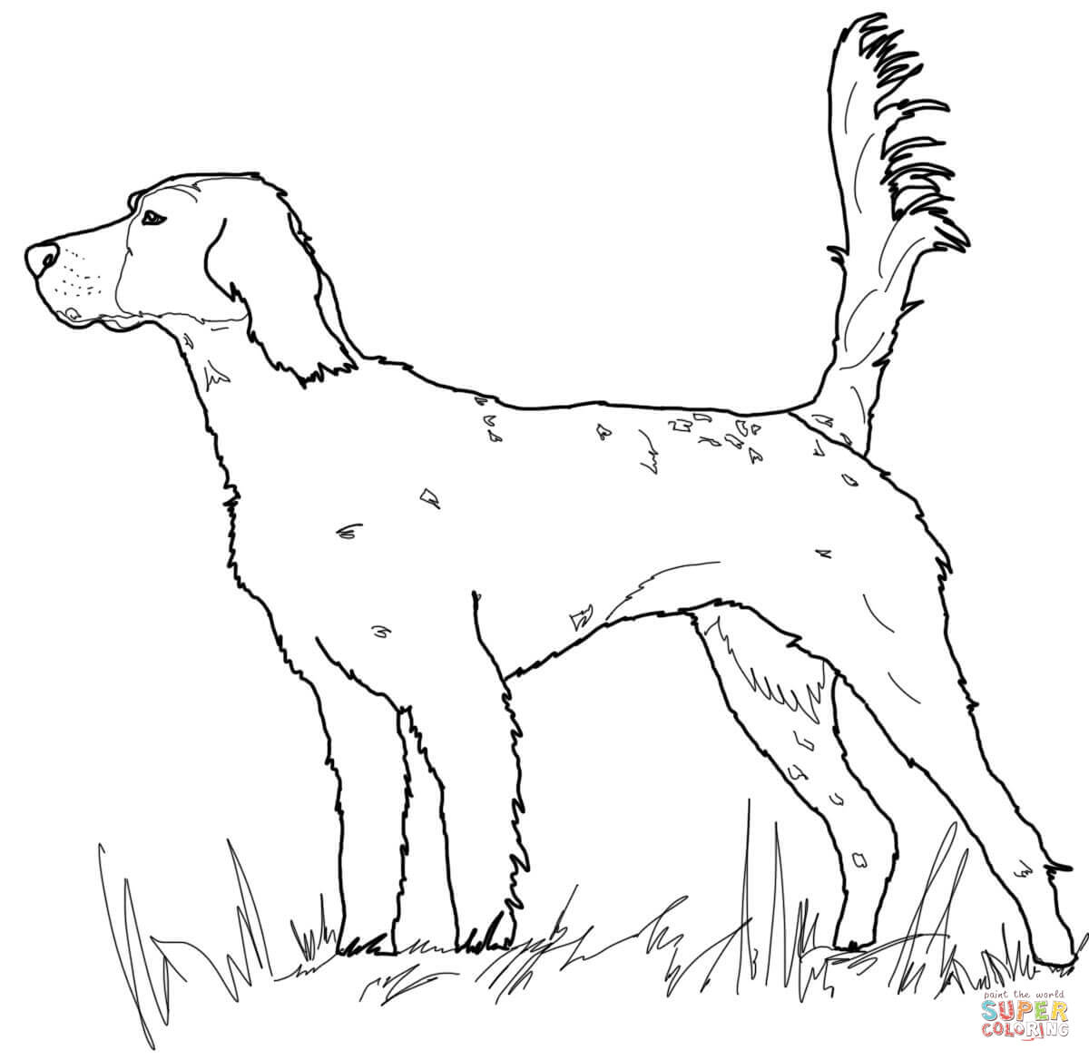 Red Setter Coloring Download Red Setter Coloring
