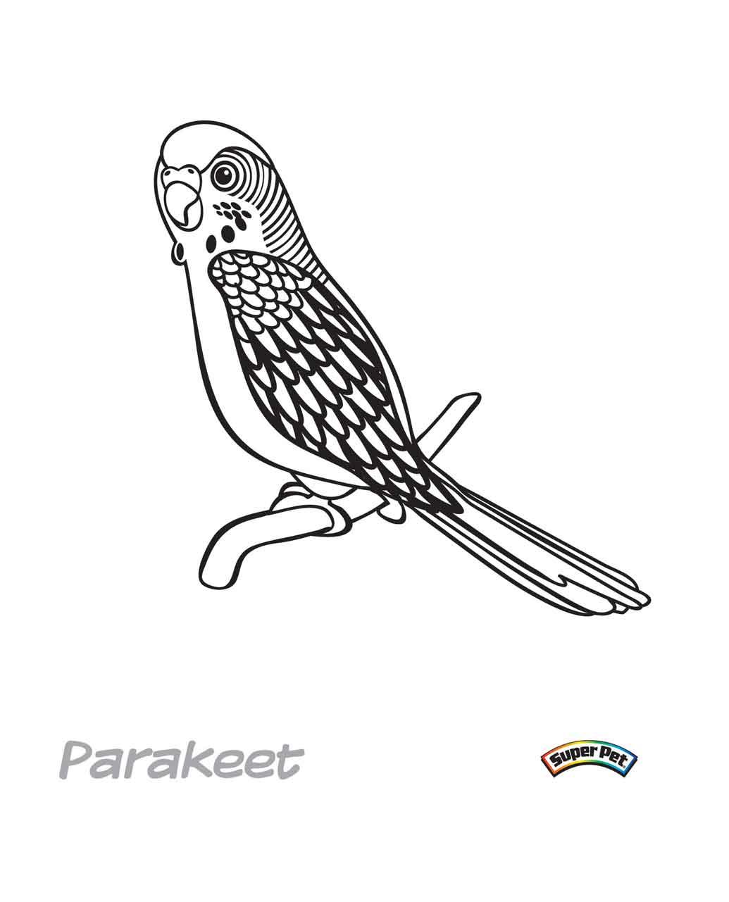 Parakeet Coloring Download Parakeet Coloring