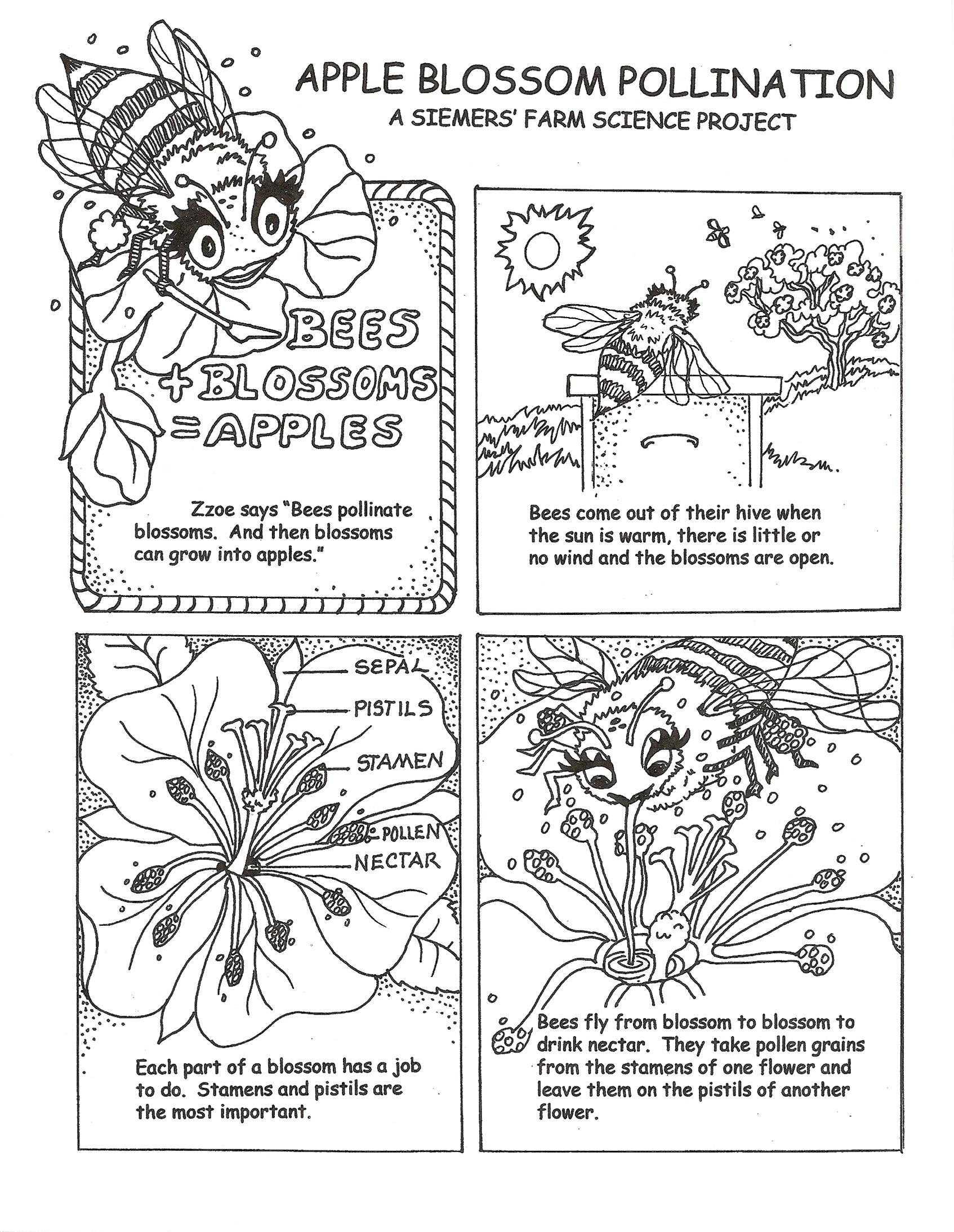 Download Pollination Coloring For Free