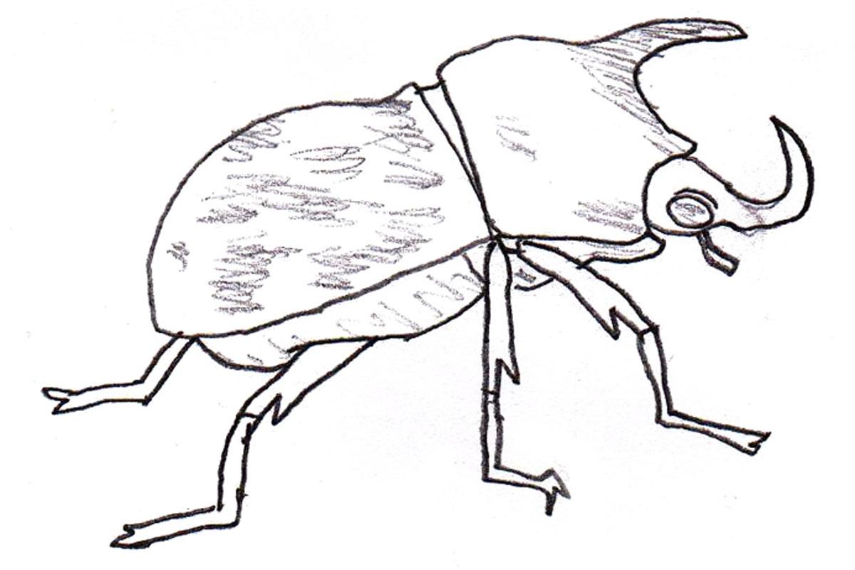 Rhinoceros Beetle Coloring Download Rhinoceros Beetle Coloring