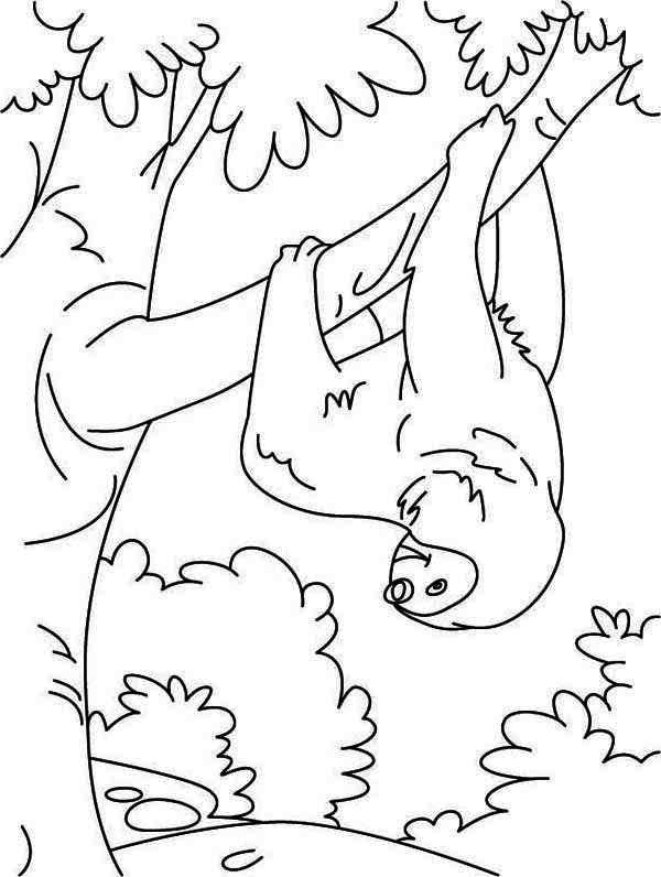 sloth coloring download sloth coloring for free