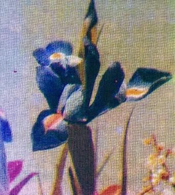 Design Luminy Jade-rousset-erasmus-2-21 Jade Rousset – École Massana – Barcelone Barcelone École Massana Séjours Erasmus Work in progress  Textile motif Massana Jade Rousset