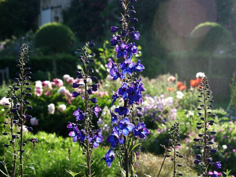Plantes Vivaces Magnifiques Dans Votre Jardin
