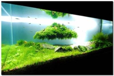 Décor aquarium élégant pour que vos poissons soient heureux
