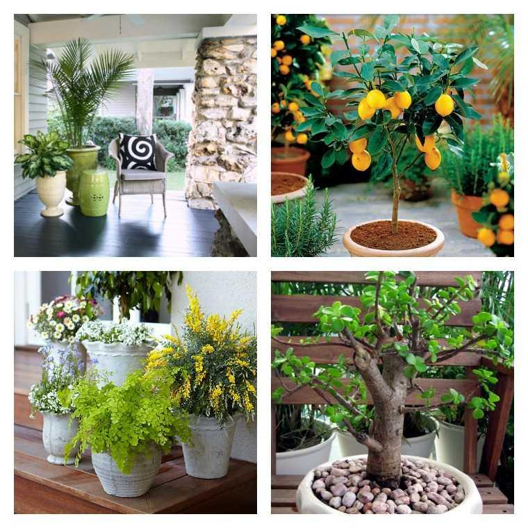 plante en pot pour terrasse 50 idees
