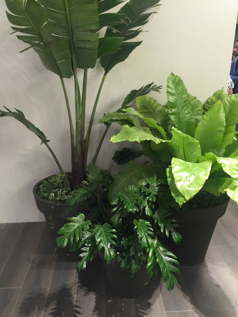 La Plante Verte Dintrieur Comment En Dcorer Votre Maison