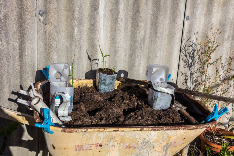 Fill with soil and compost. and water from the top for 2 weeks until the plants can wick on their own. NOTE: the wicking action will only work up to 300mm of the soil layer.