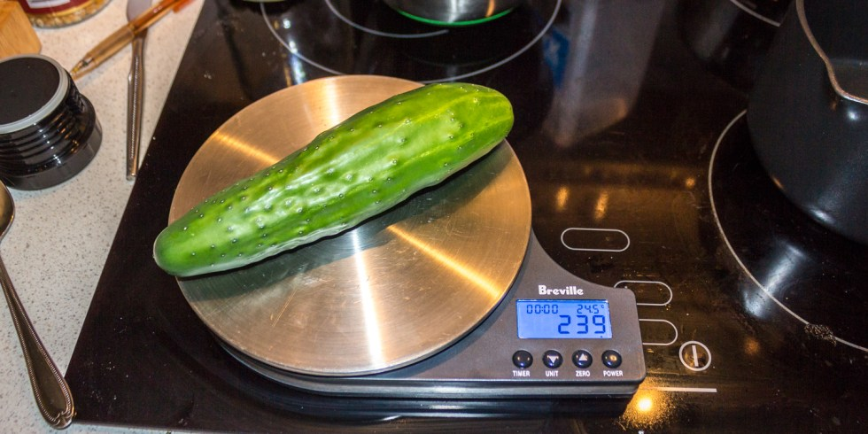 06/01/16 Home grown cucumber harvest at 239g