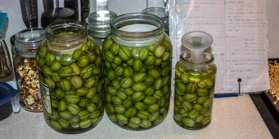 The green olives in a salt brine