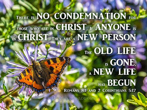 Beautiful orange Butterfly among flowers from Hamburg with words There is NO CONDEMNATION For those who are in Christ, If ANYONE is in CHRIST, They Are a NEW PERSON The OLD life is GONE, a NEW LIFE has BEGUN Romans 8:1 and 2 Corinthians 5:17