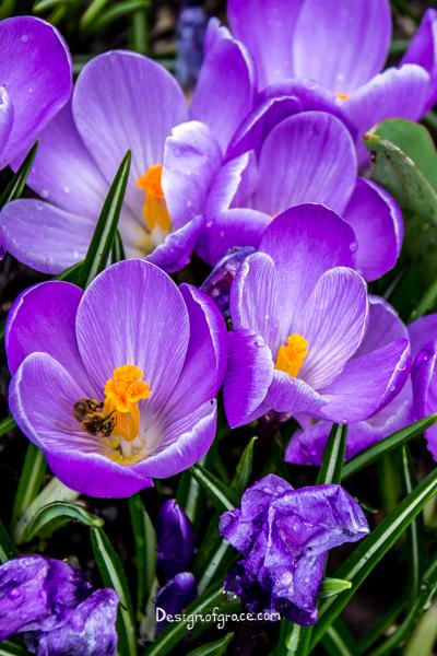 purple flowers with orange centers, Portland, USA