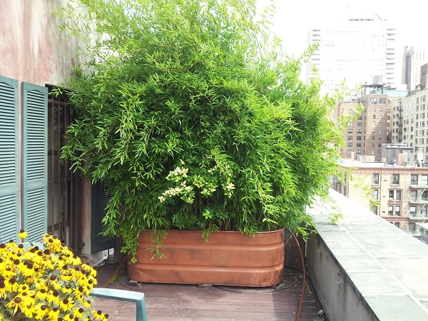 22+ Cheap Balcony Privacy Ideas PNG