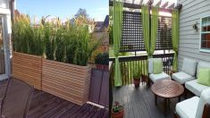 Balcony Privacy Ideas Plants