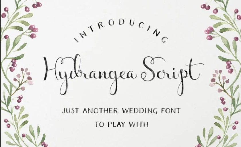 Hydrangea Script Is A Regular Font With Clean Calligraphy Feel For Wedding Invitation Design Logo Cards Etc