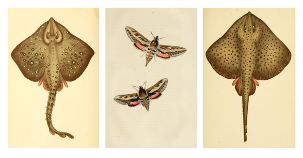 BHL Archive Entomology Natural History Fish Insect Illustrations