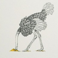 Ostrich in Pencil on Bone Wallpaper Beware The Moon detail