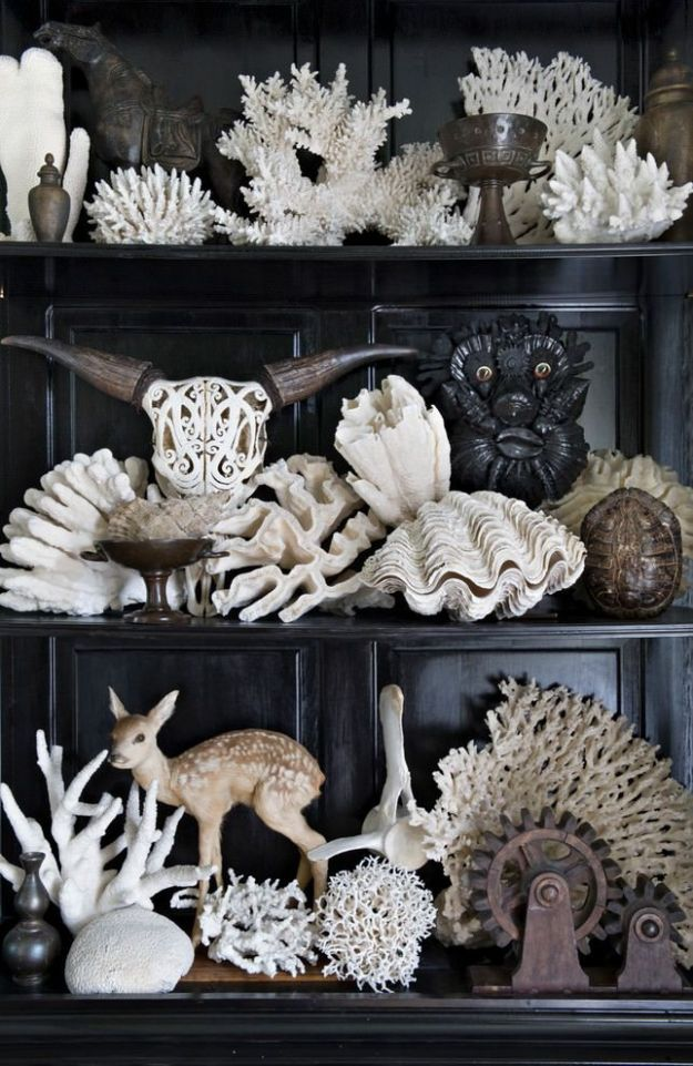 Natural History Collection of Coral