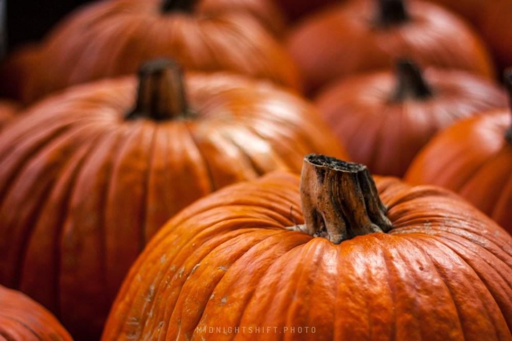 A pumpkin patch in Acushnet, Massachusetts