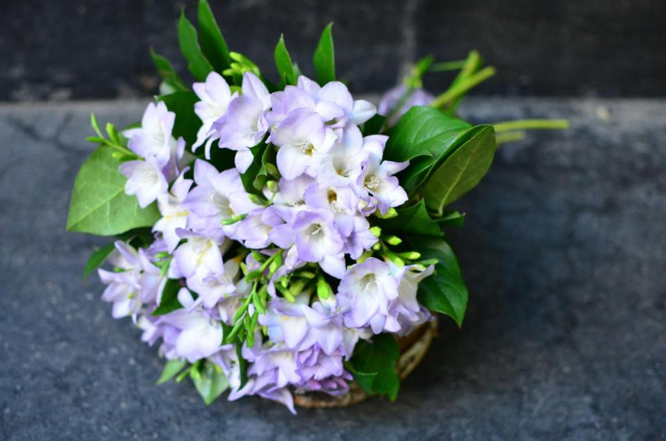 flori Floria.ro