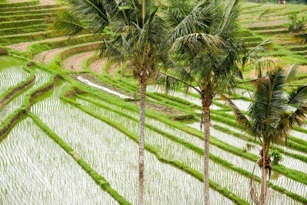 Rice terraces at Jatiluwih, Bali.