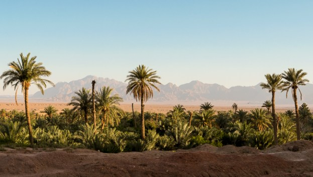 Desert oasis in Garmeh, Iran.