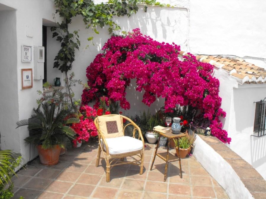 fiori in terrazza