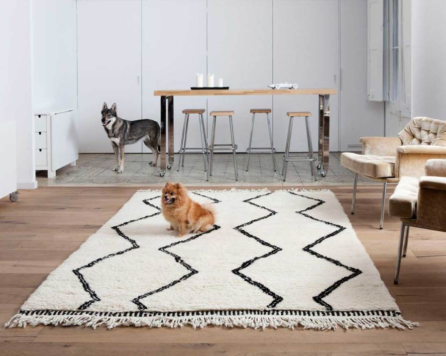 animali-domestici-cane-berber-marocchino-tappeto-casablanca