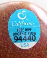 Fruit Codes