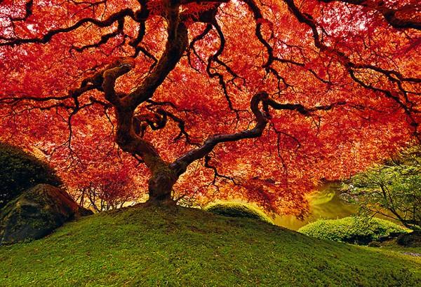pl1a 600x410 Landscapes by Peter Lik