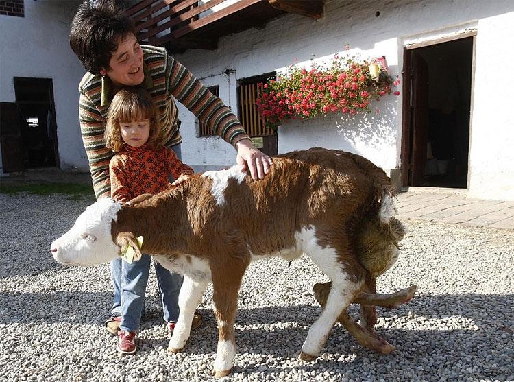 561 6 Legged Lamb Born in Georgia Plus 16 Other Bizarre Creatures