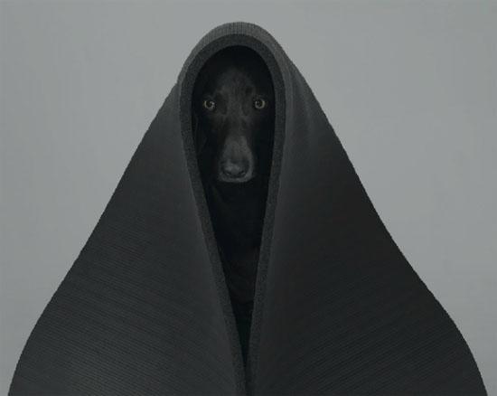 william wegman 00 Dog Portraits by William Wegman