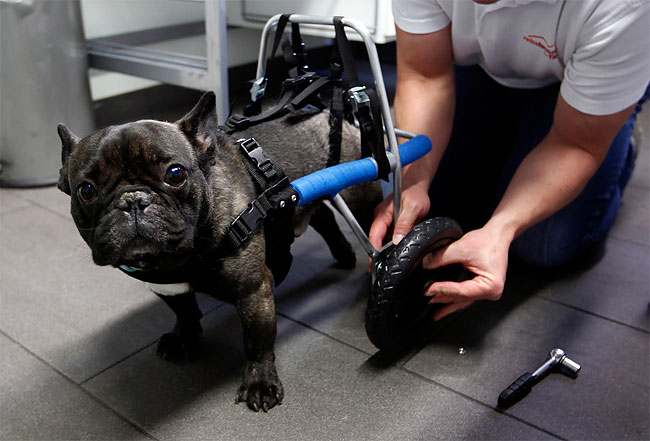 122 Injured Animals Keep Moving with Prosthetics