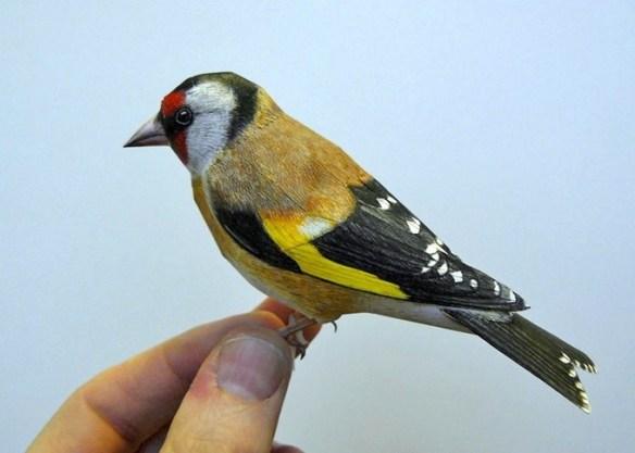 4dbird  Realistic Paper Birds by Johan Scherft