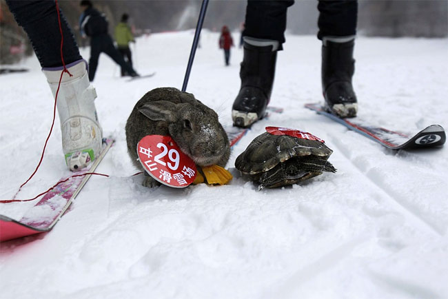 2137 Pets and their Owners Take to the Ski Slopes in China