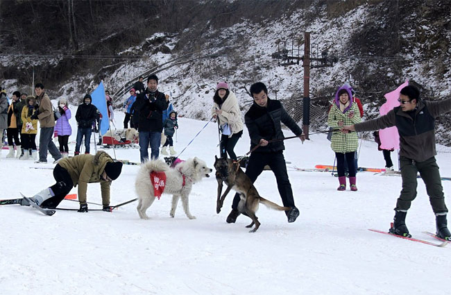 855 Pets and their Owners Take to the Ski Slopes in China