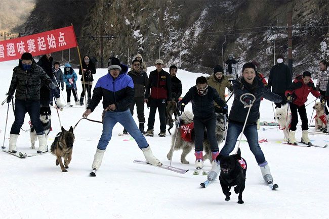 951 Pets and their Owners Take to the Ski Slopes in China
