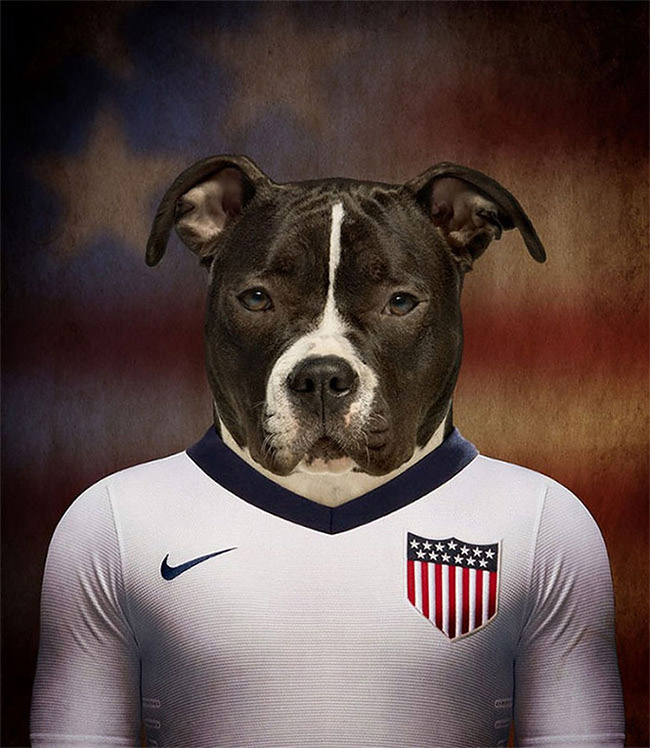 1063 Dogs Of Word Cup Brazil 2014