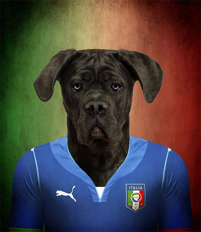 1265 Dogs Of Word Cup Brazil 2014