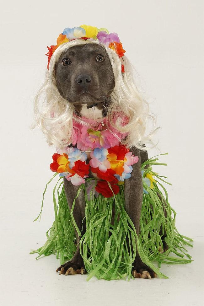 1018 British Dog Lover Spends £30,000 On Her Nine Pets