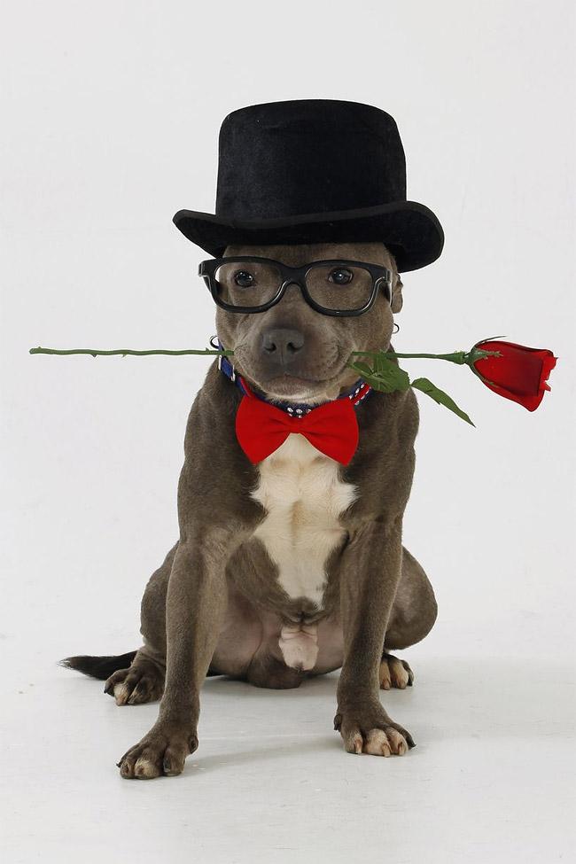 1104 British Dog Lover Spends £30,000 On Her Nine Pets