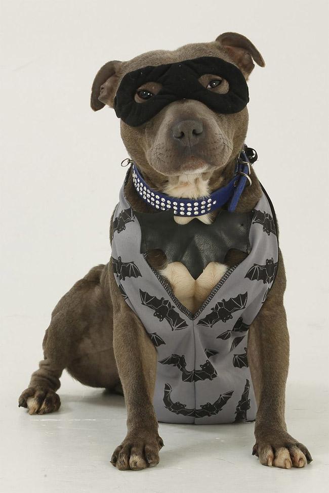 919 British Dog Lover Spends £30,000 On Her Nine Pets
