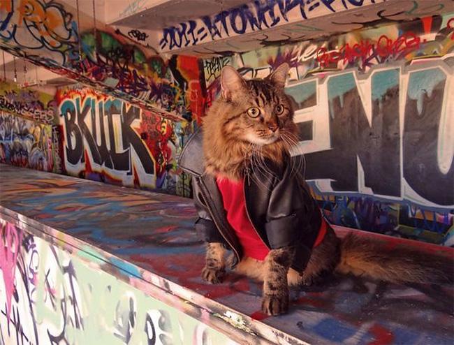 579 Lorenzo The Cat by Joann Biondi