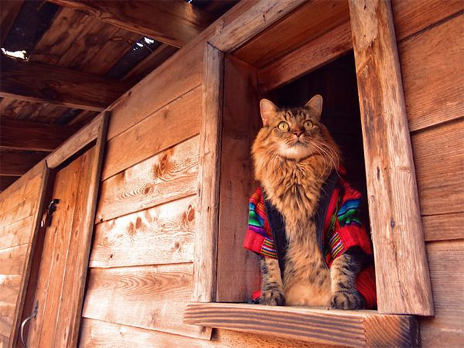 673 Lorenzo The Cat by Joann Biondi